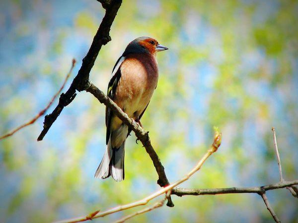 Taking Photos Bird Bird Photography EyeEm Nature Collection EyeEm Nature Lover Eyeemphotography Spring Cottonwood Trees Belarus Photography Nature Photography