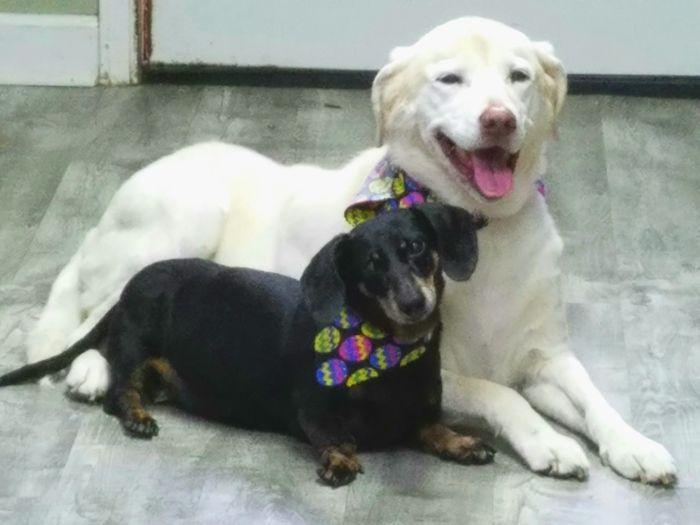 Dog Pets Labrador Retriever Dogmodel Dog Days Eye Of Ky My Photographygr Dog Lover Dog Photography Dogs Of EyeEm Dog❤ No People Dog Life Dog Grooming