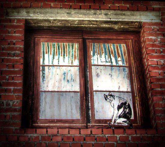 Window Somosfelices Streamzoofamily Colors