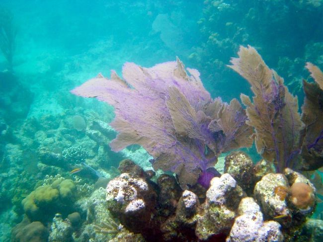 Honduras diving trip Honduras Utila Underwater UnderSea Underwater Photography Marine Life Ocean Photography Ocean Life Scuba Diving Scubalife