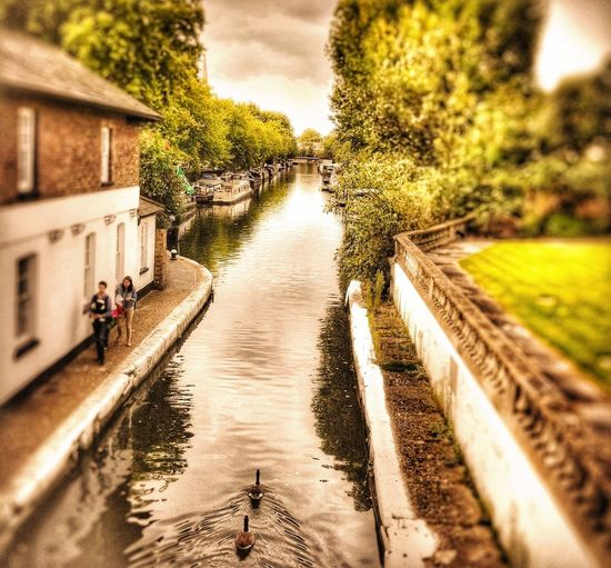 Canal Little Venice, London #byandrearochael Water Day The Way Forward Tree Outdoors Sky Nature