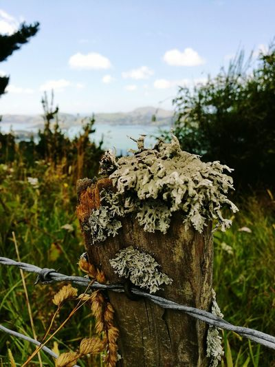 Focus On Foreground Outdoors Nature Fence Post Moss-covered Harbour Background EyeEmNewHere