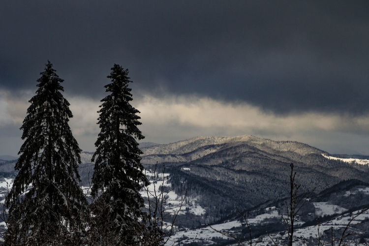 Snow Winter Cold Temperature Scenics - Nature Plant Tree Mountain Beauty In Nature Tranquil Scene Sky Tranquility Environment Non-urban Scene Cloud - Sky No People Nature Landscape Land Day Snowcapped Mountain Pine Tree Coniferous Tree Fir Tree