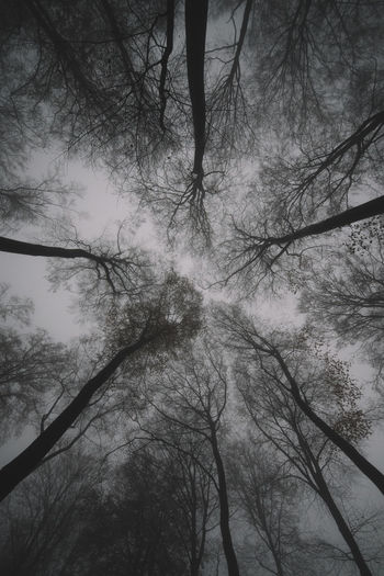 Beauty In Nature Branch Forest Forest Photography Forest Trees Growth Looking Up Low Angle View Nature Outdoors Sky Tranquility Tree Tree Trunk Trees