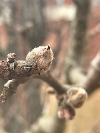 Closed Bud Tree Plant Close-up No People Day Nature Fragility Focus On Foreground