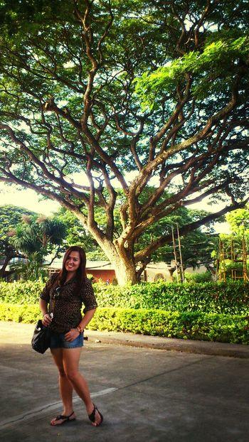 Thetrees For The Love Of Trees ~ Thepark Mytravelingram