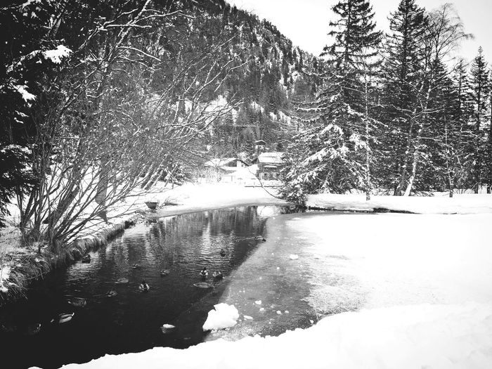 Landscape_Collection Switzerland Blackandwhite Photography Black And White Blackandwhite Winter Tree Snow Cold Temperature Nature Scenics Beauty In Nature Outdoors Tranquil Scene No People Water Frozen Day Lake Landscape Tranquility
