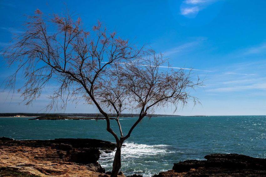 Water Sea Sky Nature Tree Horizon Over Water No People Outdoors Beauty In Nature Clear Sky Close-up Tranquility Sunset Scenics Day Print Tourism Manuelkiese Mallorcaphotographer Travel Destinations Mallorcaisland Mallorca (Spain) Clear Sky Saintjordi