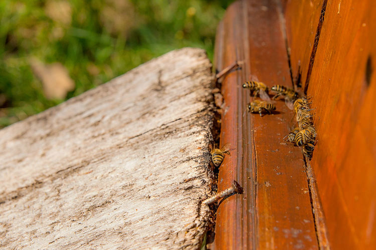 Animal Animal Themes Animal Wildlife Animals In The Wild APIculture Beauty In Nature Bee Beehive Close-up Day Focus On Foreground Insect Invertebrate Nature No People Outdoors Plant Textured  Tree Wood - Material
