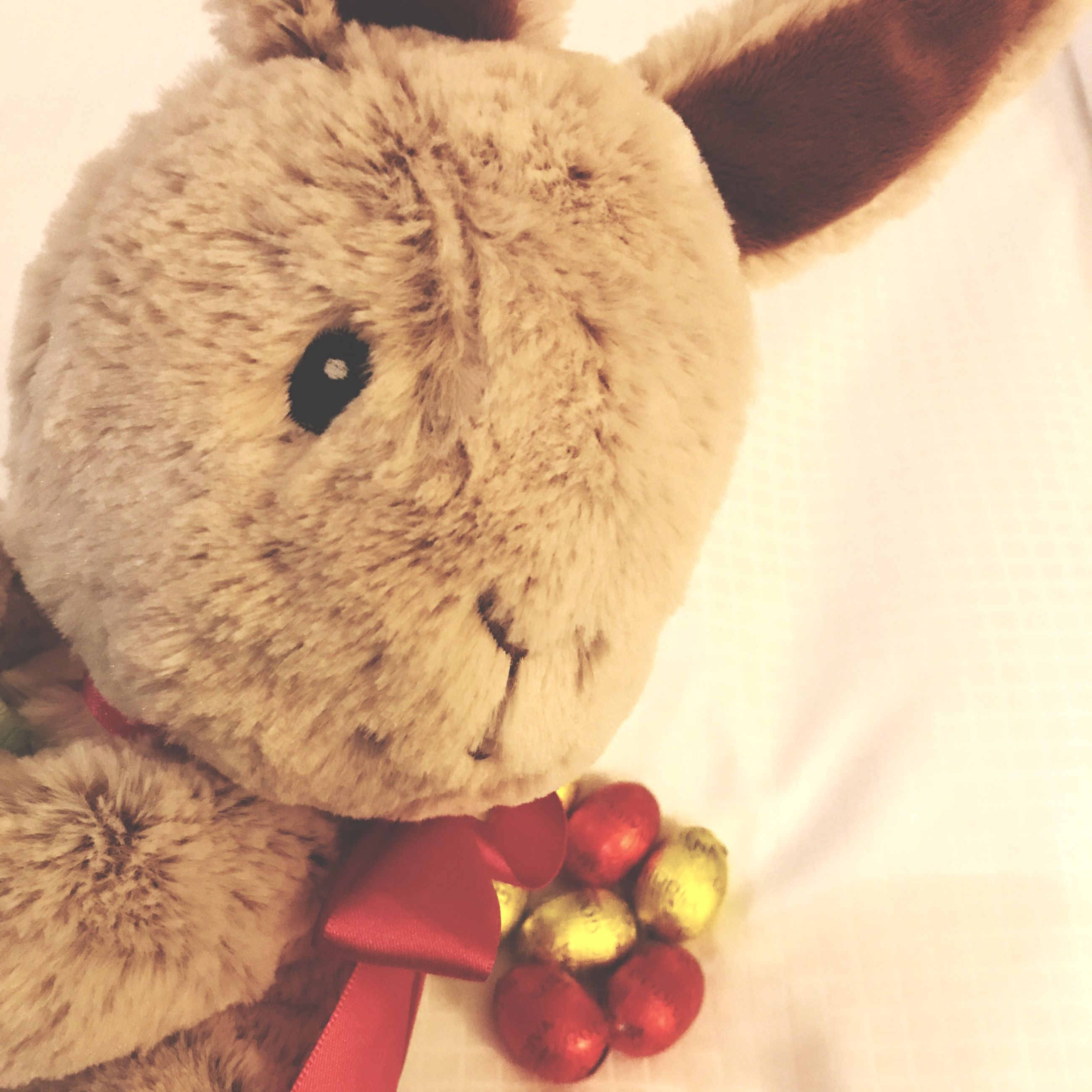 one animal, pets, domestic animals, mammal, close-up, rabbit - animal, stuffed toy, indoors, animal themes, no people, day