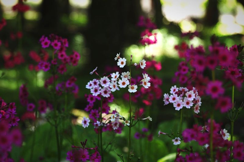 Flowers Copy Space Backgrounds Japan Flowering Plant Flower Freshness Plant Fragility Vulnerability  Beauty In Nature Growth Animals In The Wild Animal Wildlife Petal Animal Themes Invertebrate Insect Flower Head Animal One Animal Day Inflorescence Close-up