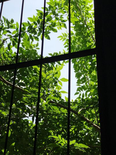 Leaf Growth Nature Green Color Low Angle View Day Plant No People Forest Tree Close-up Beauty In Nature Outdoors Window The Week On EyeEm EyeEmNewHere Iphonephotography