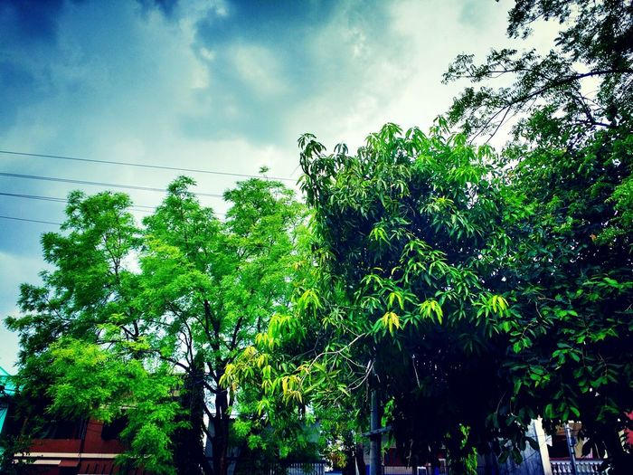 Observating nature and how the nature plays is always intresting. This photo was captured in mid summer when one day it suddenly started to rain. This is the click just before the rain. Enjoying Life Nature Photography Green LoveNature♡ First Eyeem Photo