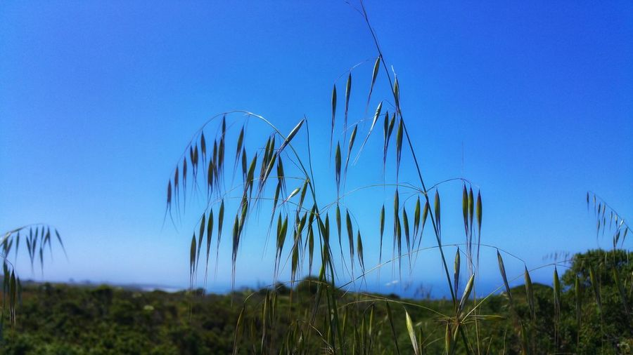 Dreamy grasses...foreground Details Background Zen Meditation Blue Sky Moment Timeless Copy Space Distance Foreground Focus Countryside Pattern Soft Focus Wispy Hanging Dangling Flighty Grass Family Blade Of Grass Reed - Grass Family Reed Tall Grass Uncultivated