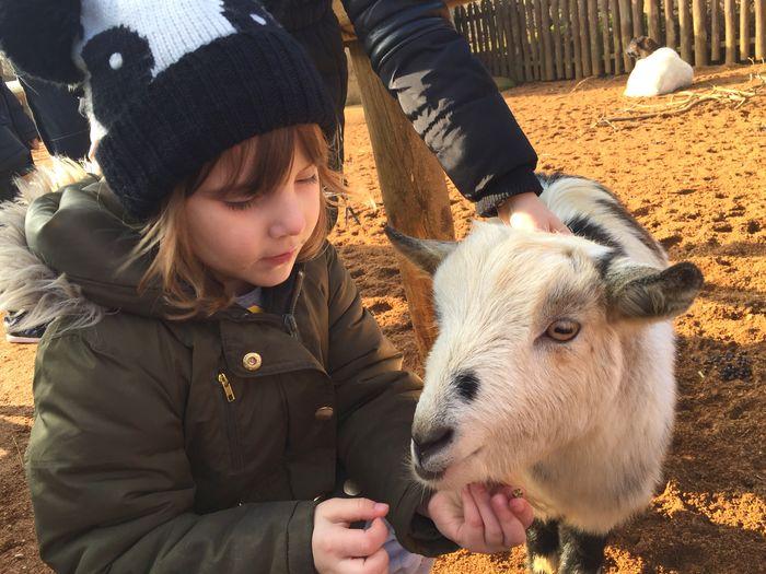 Cute girl touching sheep at farm