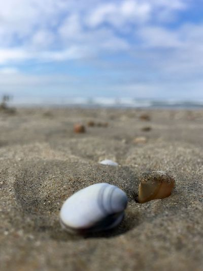 """""""Time passes. Memories fade. Feelings change. People leave. But hearts never forget."""" ❤️ Sand Beach Nature Seashell Shore Outdoors Focus On Foreground Day Sky Tranquility Close-up No People Beauty In Nature Sea Sea Life Taking Photos Hello World EyeEm Best Shots EyeEm Nature Lover EyeEmNewHere"""
