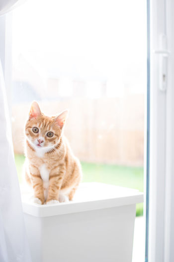 Alertness Animal Animal Themes Cat Cats Domestic Animals Domestic Cat Feline Home Sweet Home Indoors  Ketten Kitten Looking At Camera Mammal One Animal Pets Portrait Relaxation Sitting Whisker