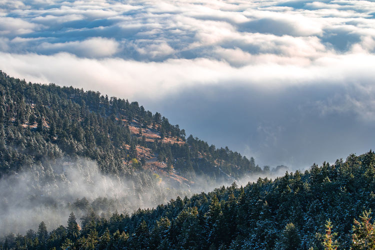 Boulder Colorado Rocky Mountains USA Tree Cloud - Sky Plant Sky Scenics - Nature Beauty In Nature Tranquil Scene Day Nature No People Tranquility Forest Non-urban Scene Growth Mountain Land Environment Outdoors Low Angle View