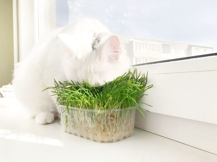 View of a cat with potted plant