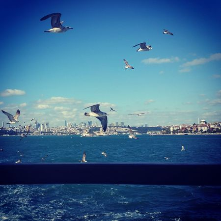Seagulls Sea Sky Ferry