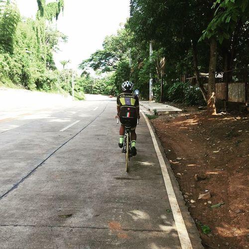 Bicycle Riding Tree Cycling Triathlete Duathlon Training