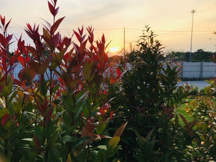 Growth Plant Sky Beauty In Nature Nature Sunset No People Plant Part Outdoors Freshness Flowering Plant Flower Tree Tranquility Sunlight Tranquil Scene Orange Color Leaf Close-up Day