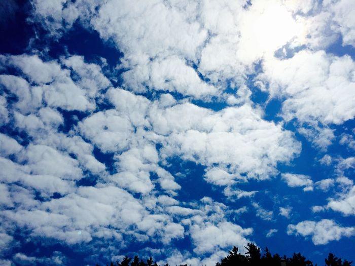 Sky Daliy