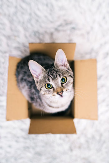 Domestic Cat Cat Pets Domestic Feline Domestic Animals One Animal Mammal Cardboard Portrait Indoors  Cardboard Box Whisker Box Vertebrate Looking At Camera No People Box - Container