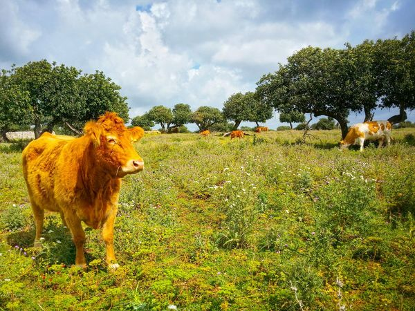 Open Air Cattle Feeding Ragusa Sicily Italy Travel Photography Travel Voyage Traveling Mobile Photography Nature Trees Shadows Architecture Stone Walls Sky Clouds Mobile Editing