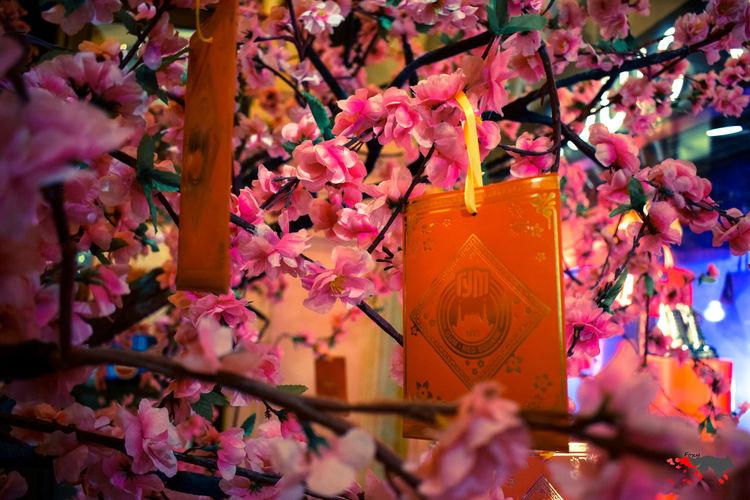 Chinese New Year ГУМ Moscow Москва сакура Китайскийновыйгод Tree Flower Hanging Springtime Autumn Blossom Close-up Architecture Flower Tree Pink Cherry Blossom Cherry Tree