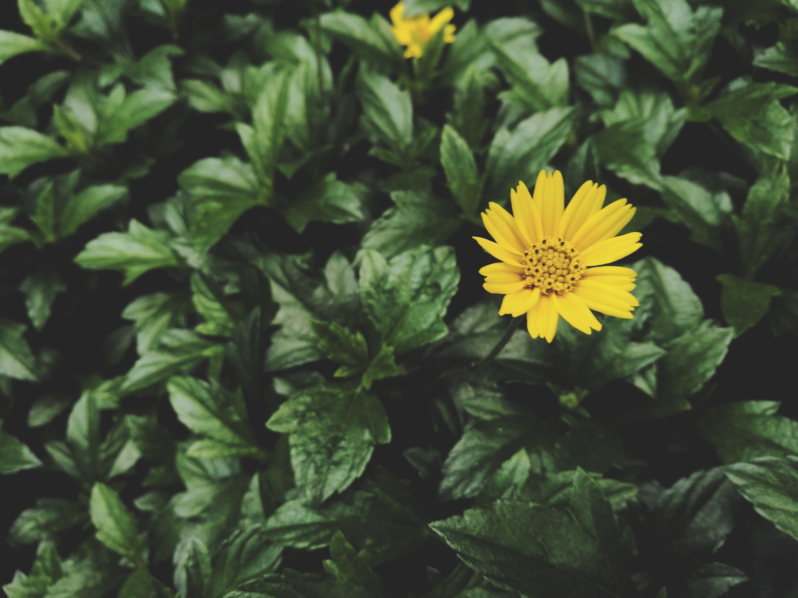 flower, yellow, beauty in nature, petal, nature, fragility, freshness, flower head, no people, leaf, close-up, plant, growth, green color, day, outdoors, blooming