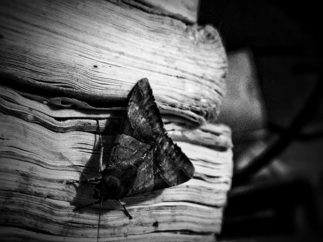 EyeEm Selects Shadow Darkness Butterfly Black NayGuardian ©