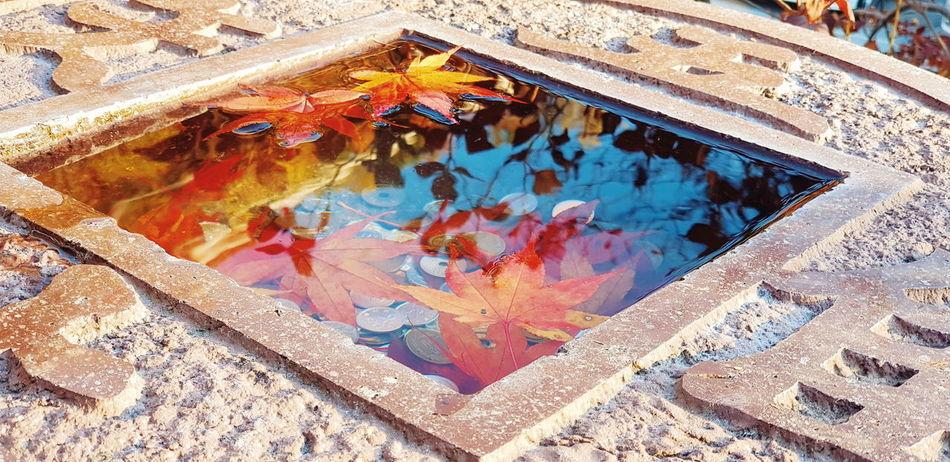 Maple leaf in niko japan autum Japan Photography Japan Autumn Nikko Japan Leaf Maple Leaf Maple Mapleleaf Autumn🍁🍁🍁 Autumn colors Japan Autumn Backgrounds Pattern Close-up