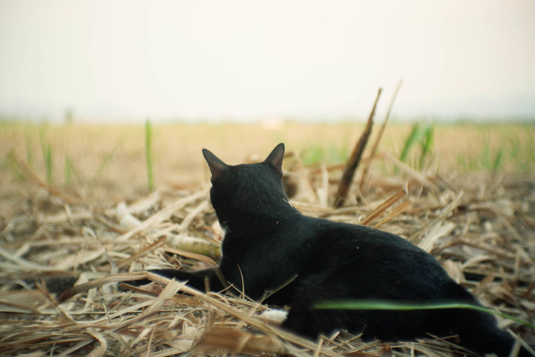 Domestic Animals Grass Nature Plant No People Domestic Black Color One Animal Mammal Animal Themes Animal Day Feline Field Pets Sitting Vertebrate Cat Land Looking EyeEm Nature Lover