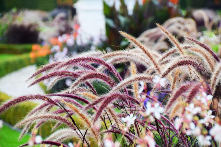 Close-up of grass growing outdoors