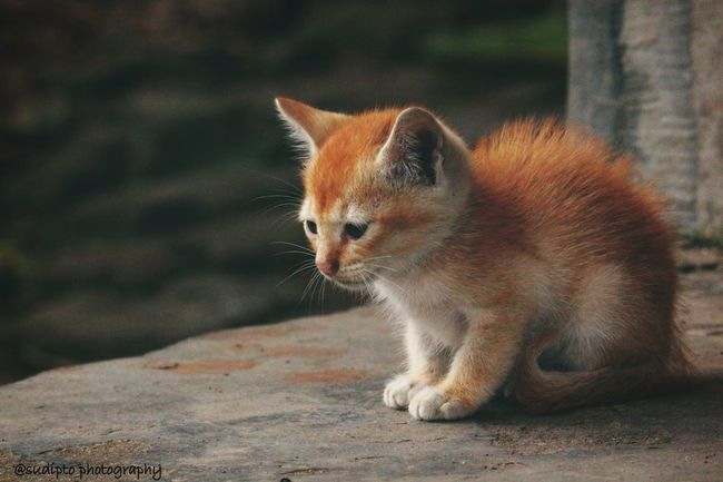 Always love pet's Domestic Cat Petlovers Dslrphotography Canon700D Canonindia Canonphotography Domestic Animals Animal Themes Close-up Outdoors One Animal Pets