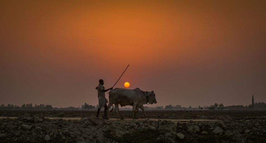 Heading home... Farmers Sunset Oxen Janakpur Agriculture EyeEm Best Shots Nepal #travel Nepal