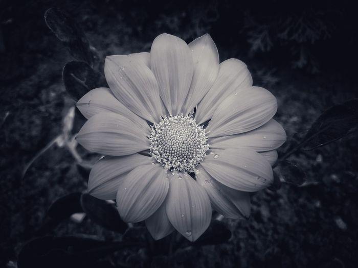 flower...black
