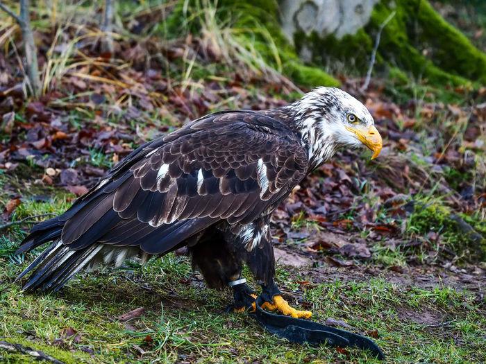 75 -300mm Animal Detail Eagle Olympus Olympus Om-d E-m10 Wildpark