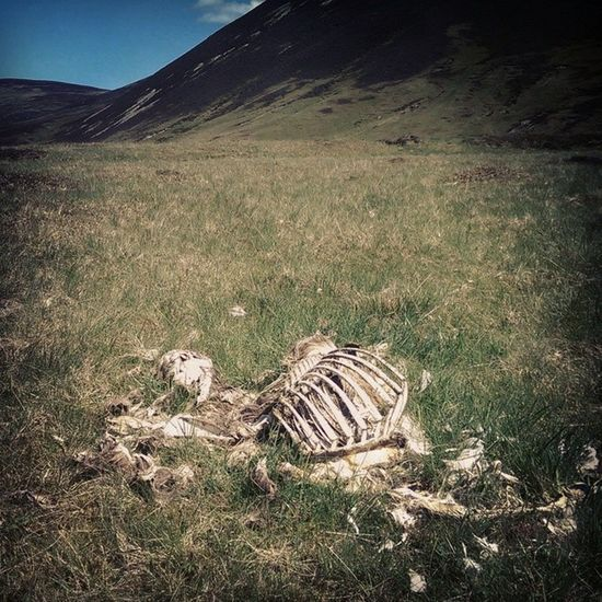 In death, a member of Project Mayhem has a name. His name is Shaun the Sheep. Shaun Sheep Project Mayhem  death Cairngorms