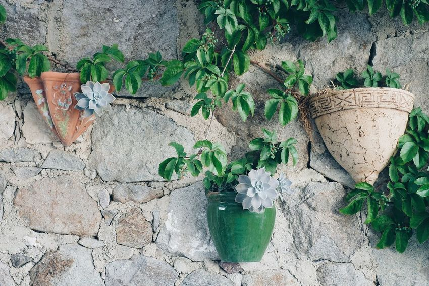 Mini garden on the wall StillLifePhotography Slow Life Cacti Eye4photography  FUJIFILM X-T2 Summer Summertime Still Life Plant Growth Green Color Plant Part Nature Leaf Potted Plant Wall - Building Feature Stone Wall Creativity Beauty In Nature Gardening Outdoors The Still Life Photographer - 2018 EyeEm Awards