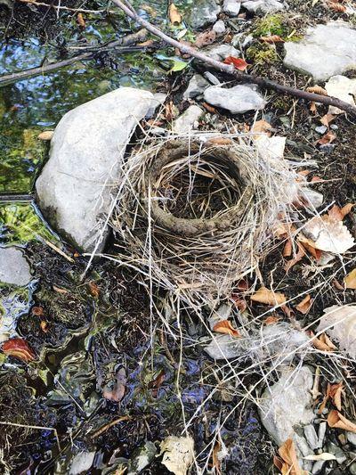 Fallen Birds Nest Birds Nest Nature Outdoors No People Fallen Creek Side Treasure EyeEm Nature Lover Unoccupied