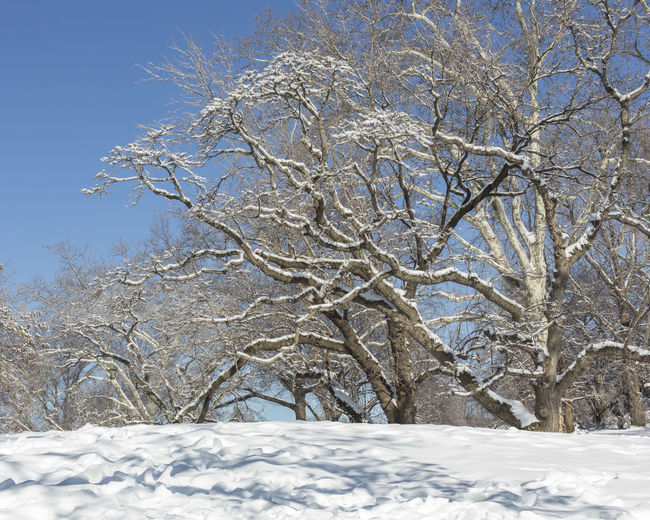 Central Central Park - NYC CentralPark Day Nature New York New York City No People Outdoors Scenics Season  Snow Tranquil Scene Tranquility Tree Tree Weather Winter