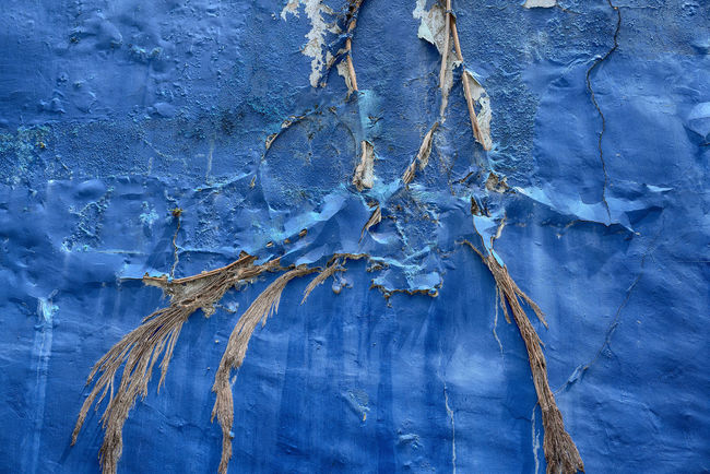 Backgrounds Blue Close-up Day Full Frame Nature No People Outdoors Paint Pattern Textured  Tree Roots