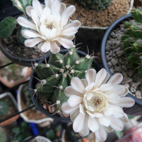 Flower Head Flower Flowerbed Springtime Uncultivated Botanical Garden Petal Front Or Back Yard Close-up Plant