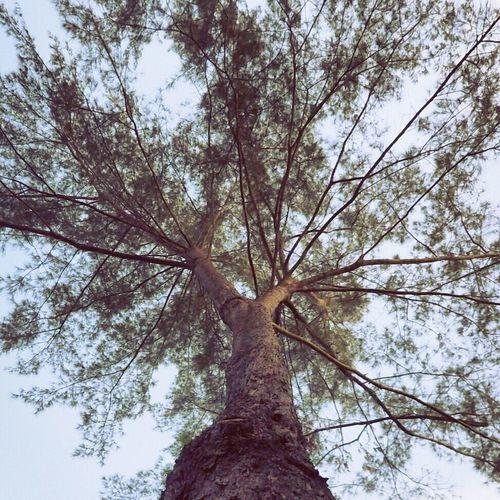 Before it gone Taking Photos Trees Naturelovers Nature Photography EyeEm Nature Lover EyeEm Gallery | school | universiti Malaysia Sabah | Gansau | Northborneo