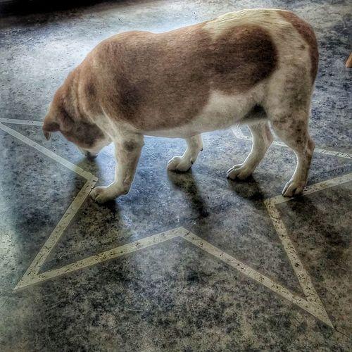 Blondie is a Star! Dogs Of EyeEm One Animal Doggie Porn.. Dog Gone Cute! Dan Of Steel