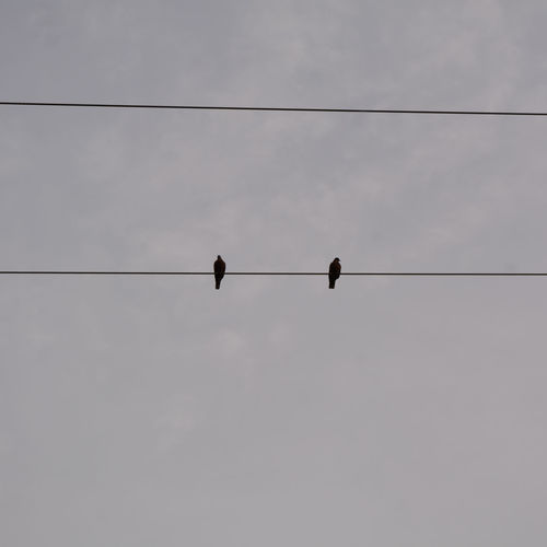 Birds are in the wires Animal Animal Themes Animal Wildlife Animals In The Wild Bird Cable Cloud - Sky Connection Day Electricity  Flock Of Birds Group Of Animals Low Angle View Nature No People Outdoors Perching Power Line  Power Supply Silhouette Sky Telephone Line Vertebrate