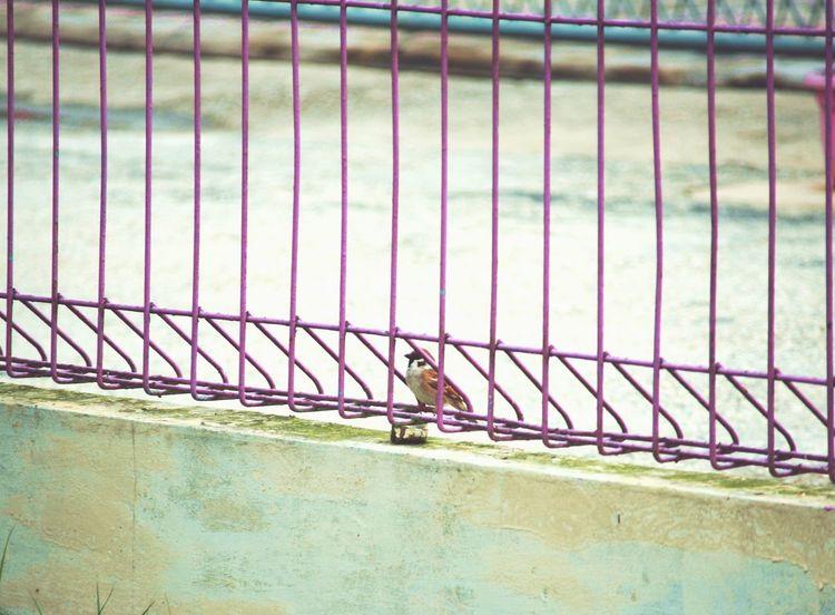 Waiting Day Outdoors Bird EyeEm Bird View Photo