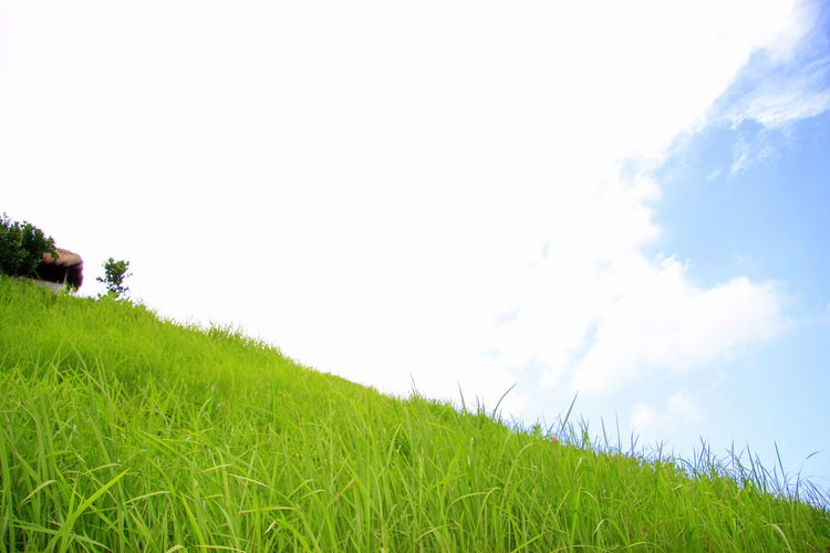 clim up of the menganti hill Agriculture Clouds And Sky Field Grass Grassy Green Green Color Hill Horizon Over Land Landscape Nature Sky